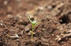 soil gradation standard